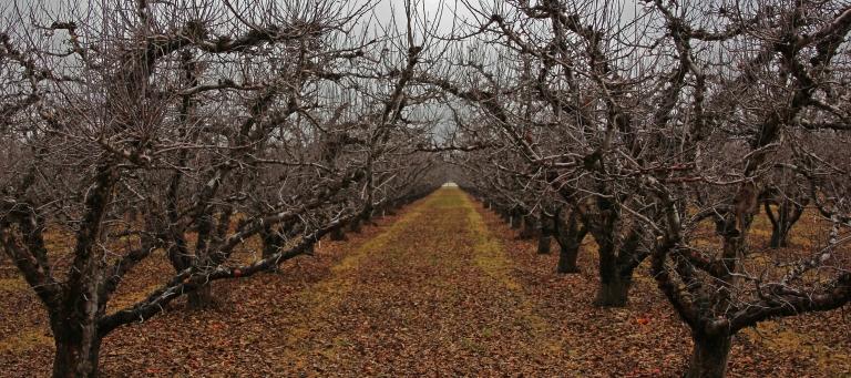 hibernating orchard